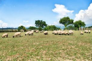 azienda-agricola-casale-dei-mattonari-umbria-4