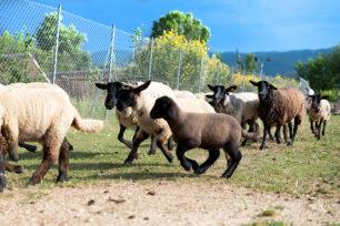 azienda-agricola-casale-dei-mattonari-umbria-6